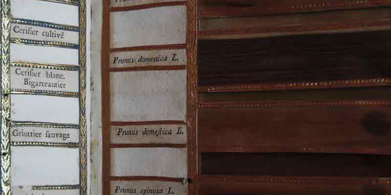 """Dendrografia insubrica, ovvero rappresentazione de' legni della Lombardia. In Milano, appresso Carlo Somaschi, 1793. Sul piatto anteriore cartiglio """"Ex libris Dr. Jos. Moretti"""""""